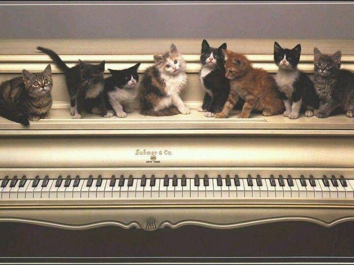 Ils sont pas beaux ces chats !