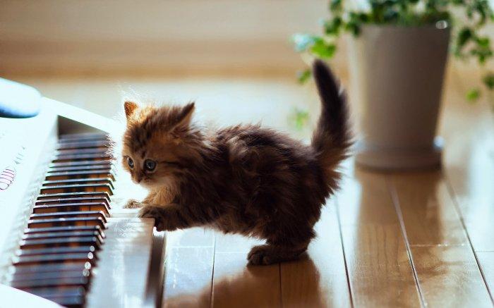 Mignon, ce chat !
