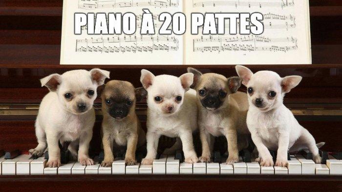 Piano à 20 pattes